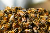 The buzz about  SEO